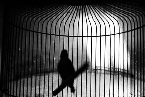 birdblackandwhiteblurcagephotographysilhouette-0f0d10c2c4a519c4aac9482591d3948a_h